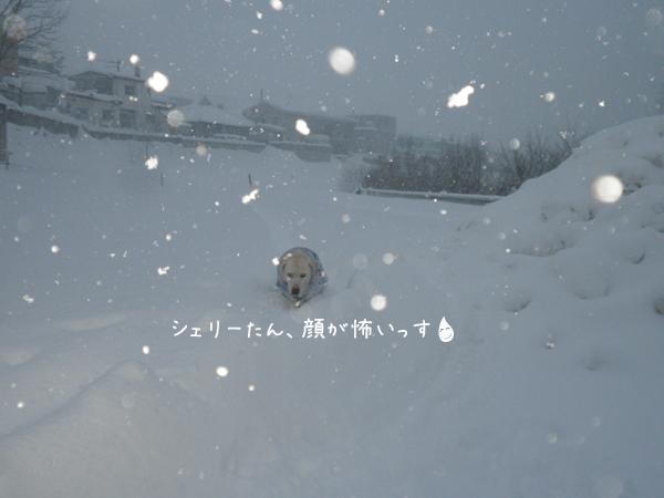 sanpo2_20121218211621.jpg