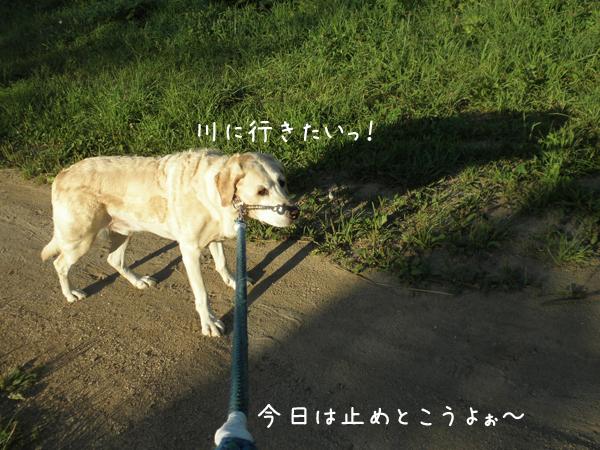 sanpo3_20120907205343.jpg