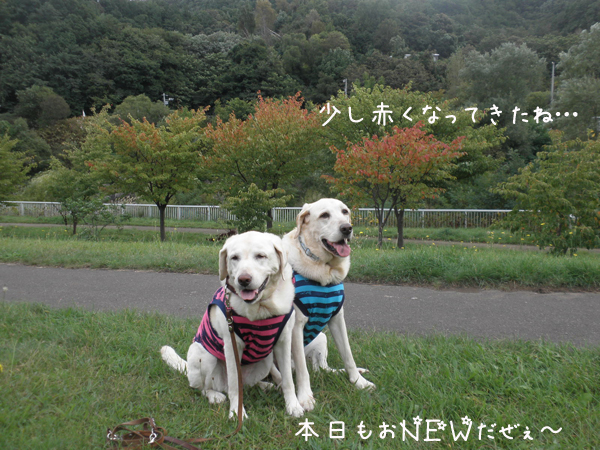sanpo3_20121001192352.jpg