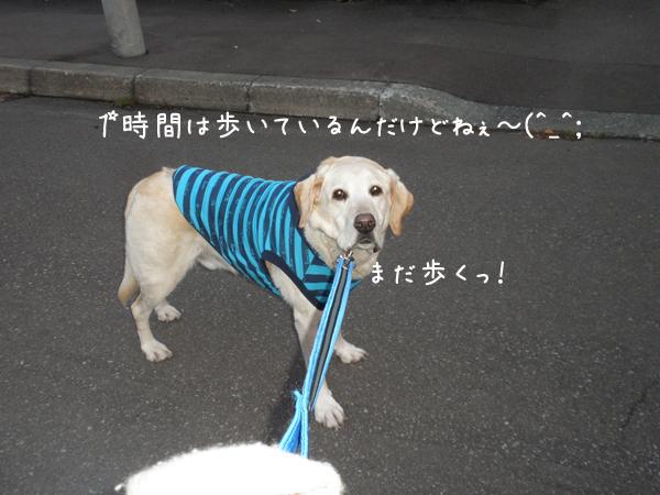 sanpo3_20121030223037.jpg