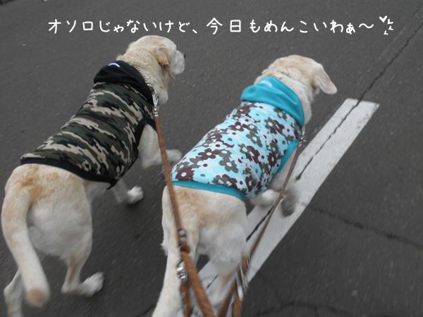 sanpo3_20121031210730.jpg