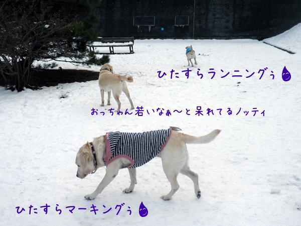 sanpo3_20121125203050.jpg