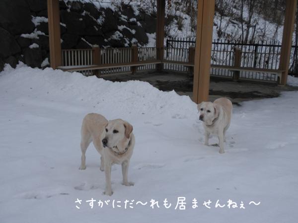 sanpo3_20121129210735.jpg