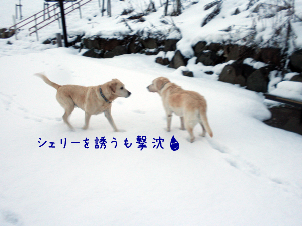 sanpo3_20121205174345.jpg