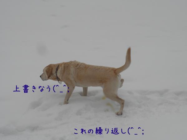 sanpo3_20121210184713.jpg