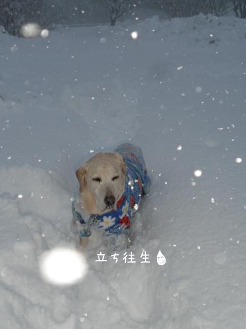 sanpo3_20121218211626.jpg