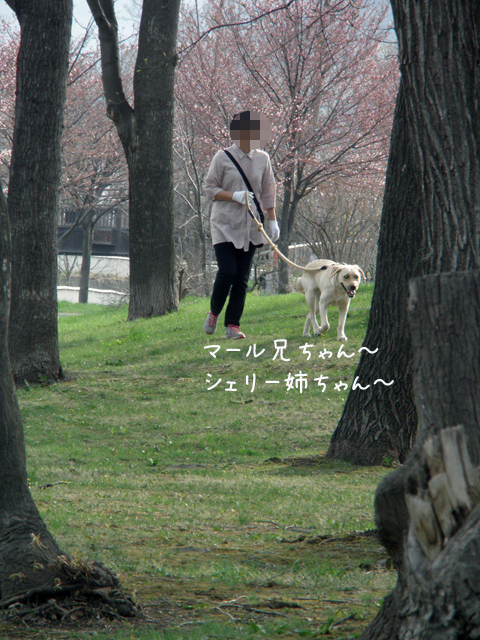 sanpo4_20120501231322.jpg
