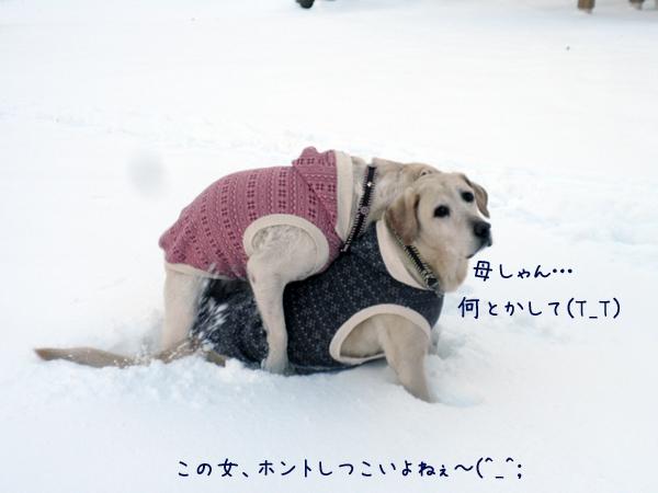 sanpo4_20121207235947.jpg
