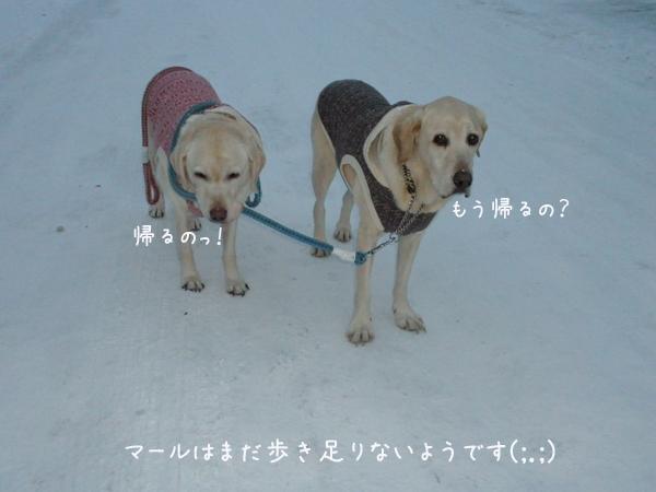 sanpo5_20121208001302.jpg