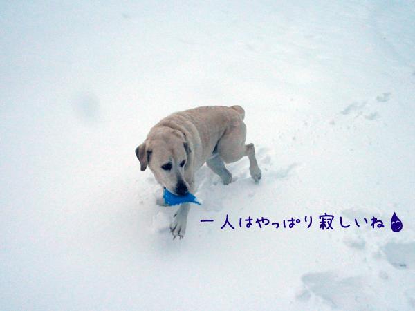 sanpo5_20121210185625.jpg