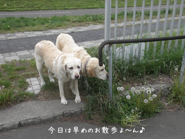 sanpo_20120529215319.jpg