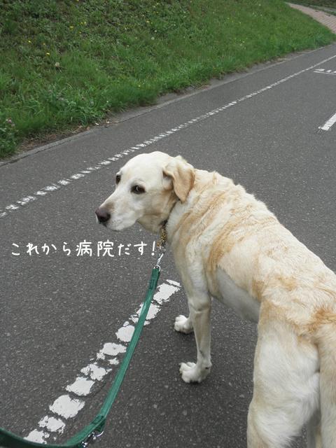 sanpo_20120817214821.jpg