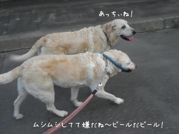 sanpo_20120825215205.jpg