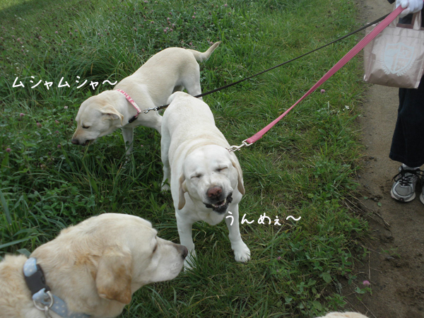 sanpo_20120925202136.jpg