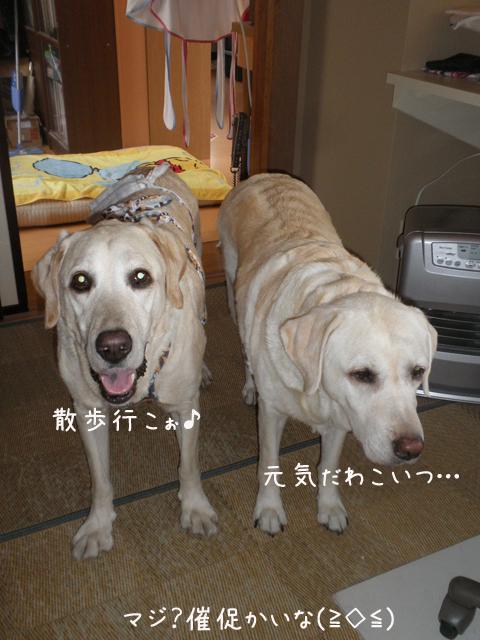 sanposaisoku_20120721212425.jpg