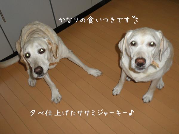 sasami1_20120925202137.jpg