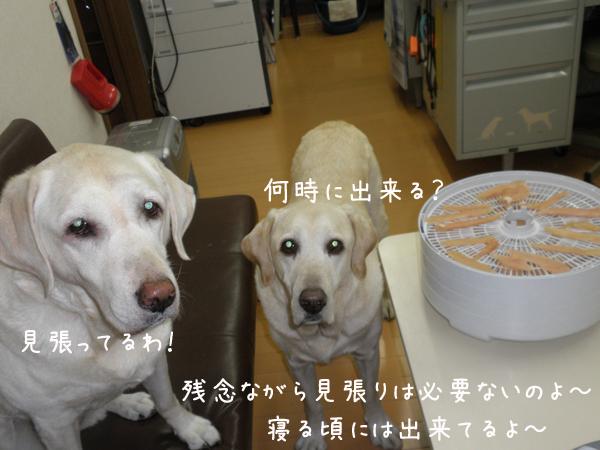 sasami2_20121107215624.jpg