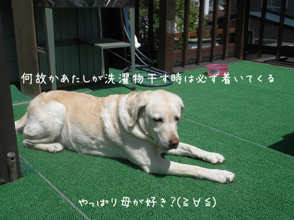 shelley_20120602215816.jpg