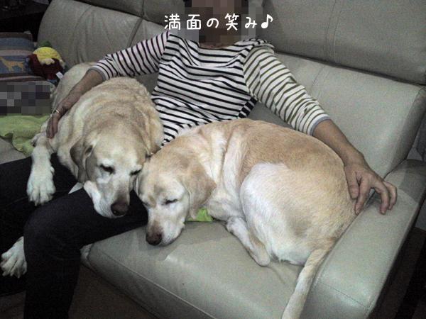sofa1_20130129204439.jpg