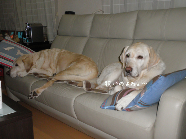 sofa2_20121225220808.jpg