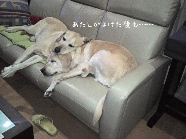 sofa2_20130129204446.jpg