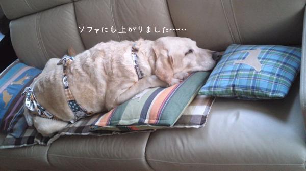 sofa_20120719094205.jpg