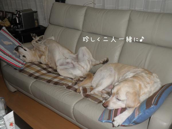 sofa_20121225220803.jpg