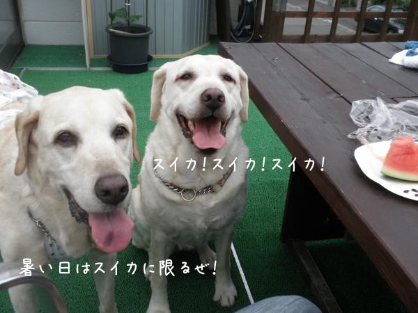 suika_20120731202852.jpg