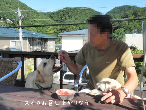 suika_20120902221322.jpg