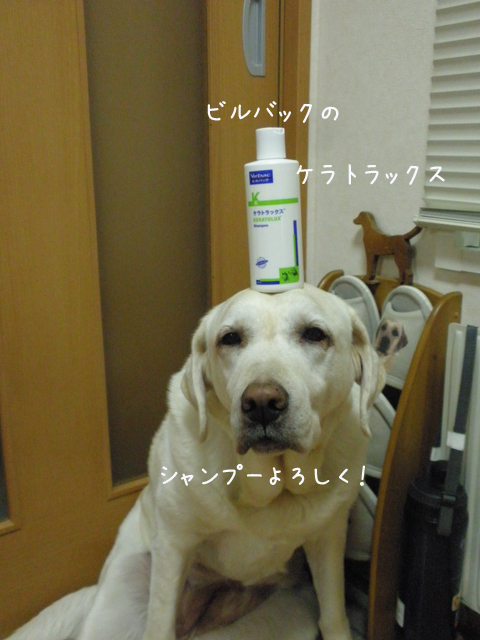 syanpu_20121102233629.jpg