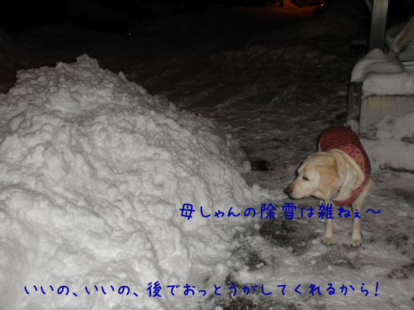 syeri2_20121211200841.jpg