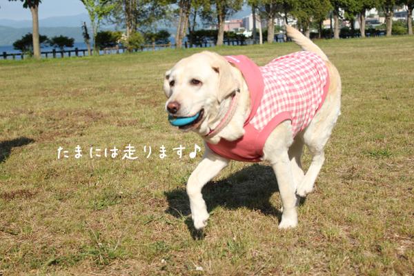 syeri_20120615121810.jpg