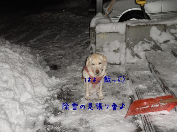 syeri_20121211195721.jpg