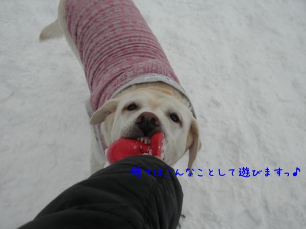 syeri_20121214221014.jpg
