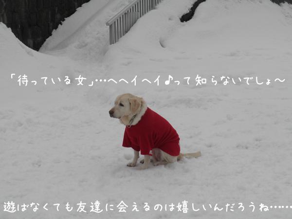syeri_20121230224357.jpg