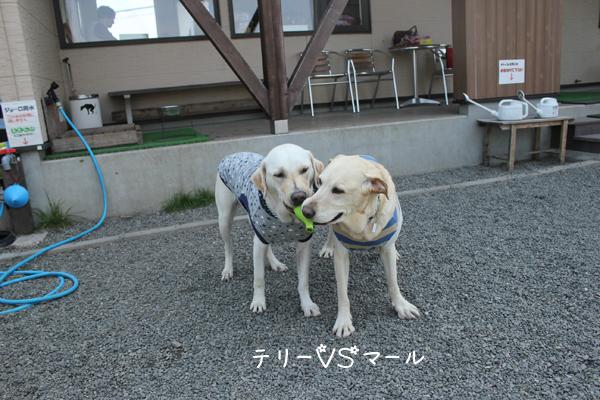 terimaru_20120510211100.jpg