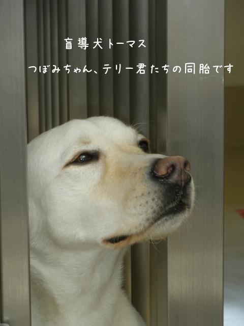 tomasu2.jpg