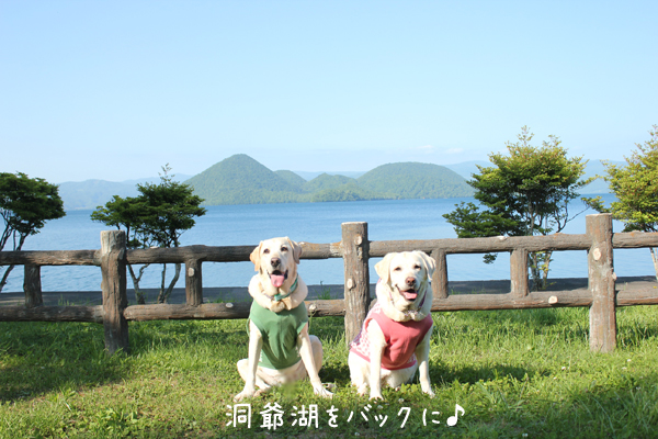 touyako1.jpg