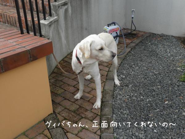 viba_20121019221138.jpg