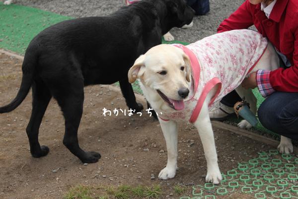 wakaba1_20120510211518.jpg