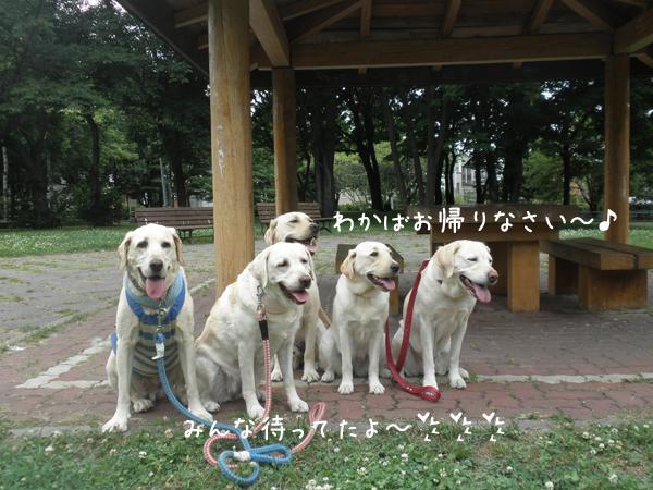 wakaba1_20120726214119.jpg