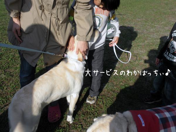 wakaba_20120424214846.jpg