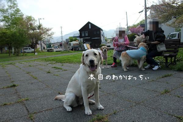 wakaba_20120517211540.jpg
