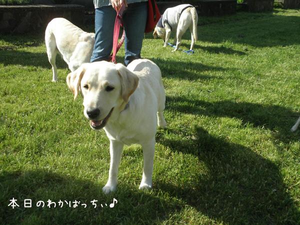 wakaba_20120526205045.jpg