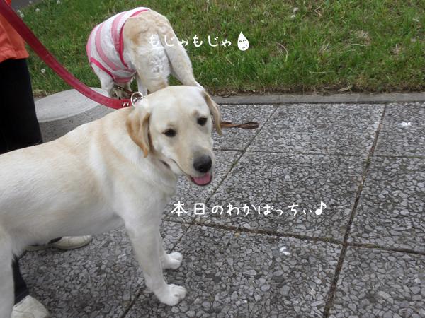 wakaba_20120601210649.jpg
