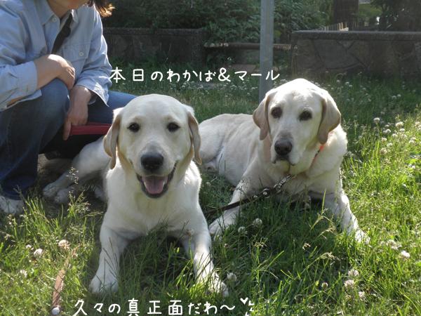 wakaba_20120612182435.jpg