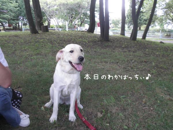 wakaba_20120729215728.jpg