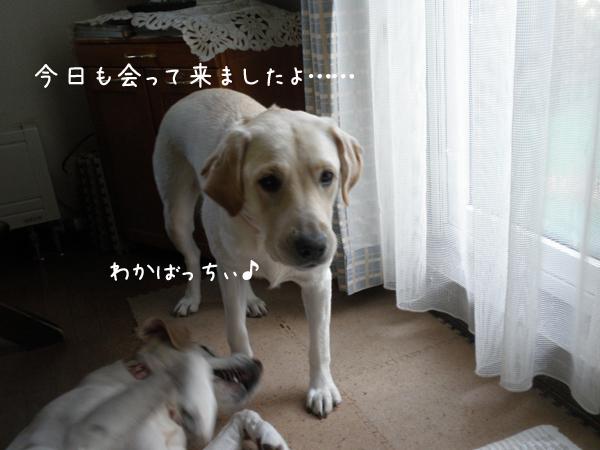 wakaba_20121009232941.jpg