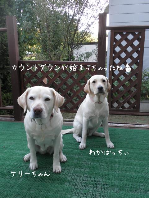 wakabakeri_20121009232941.jpg