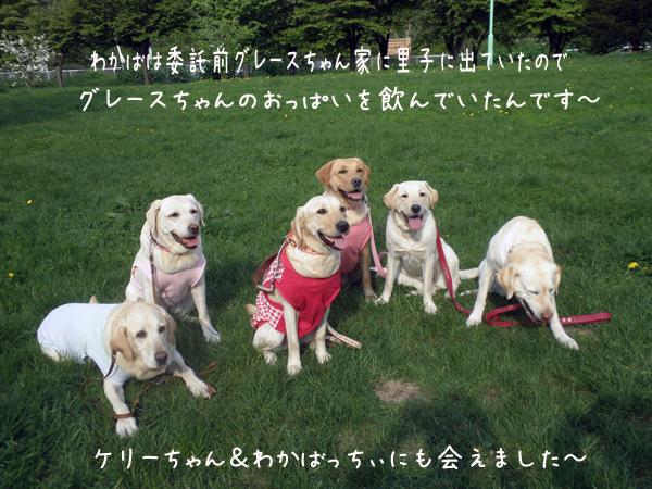 wakabamae_20120523103951.jpg